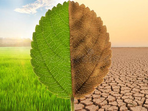 CLIMATE DISASTER LAW WITH RESPECT TO INDIAN SCENARIO