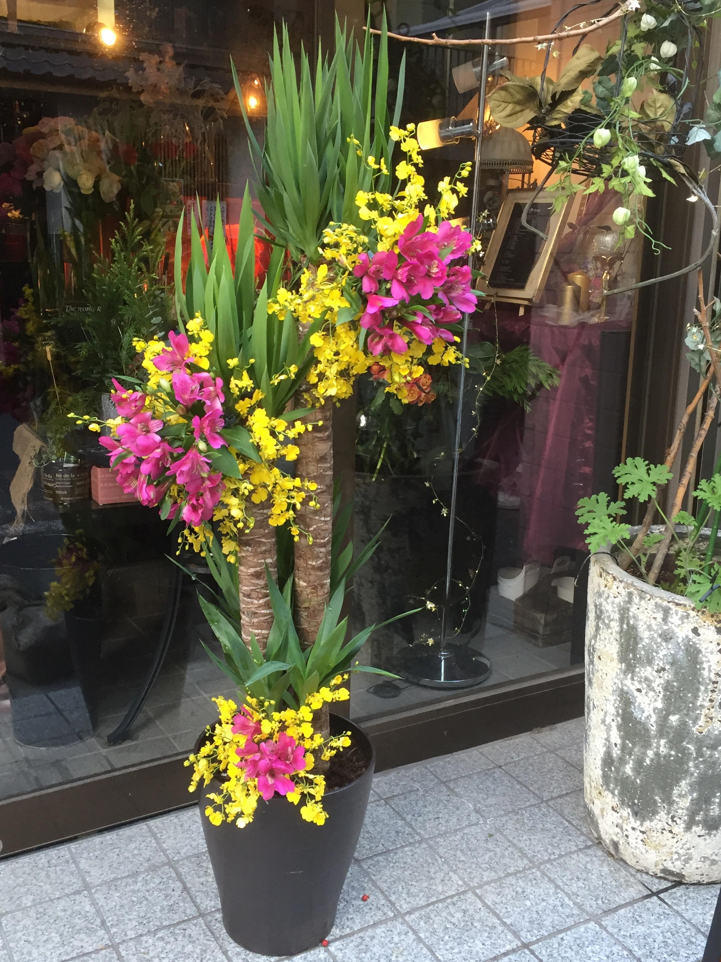 観葉植物の御祝花