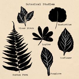 Botanicalstudiesbl.jpg