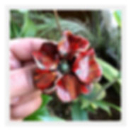 ✨Handmade clay poppy brooch in honor of