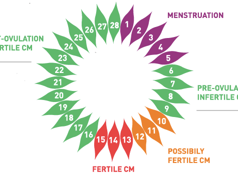 All you need to know about cervical mucus!
