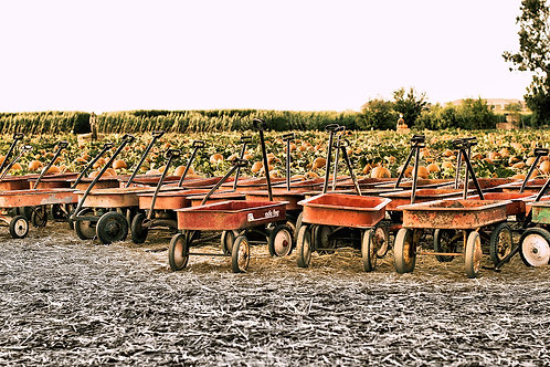 Wagons in fall 1