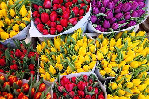 Assorted bunches of colourful tulips