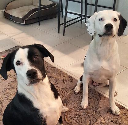Vera and Pearl