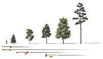 Træer fra Topbeskæring.dk