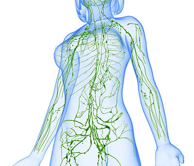 Lymphatic system- The highway of the immune system