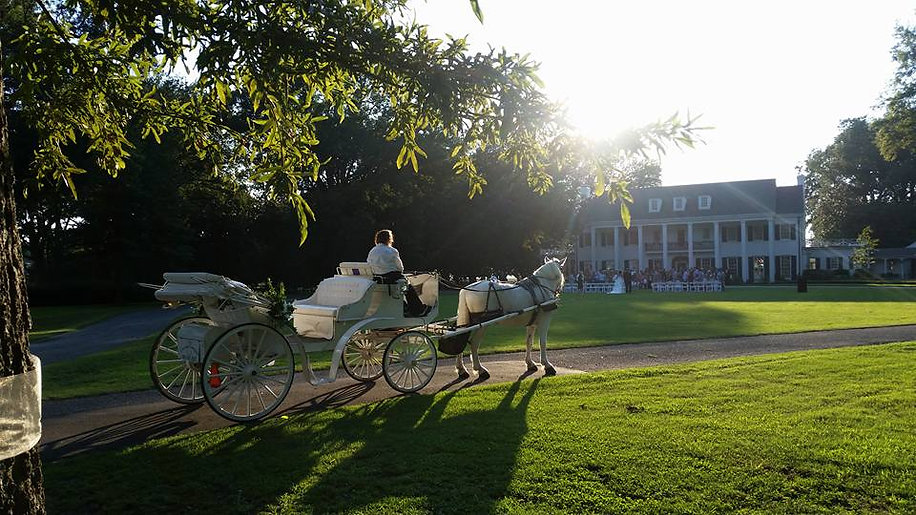 Wedding Horse and Carriage Rentals