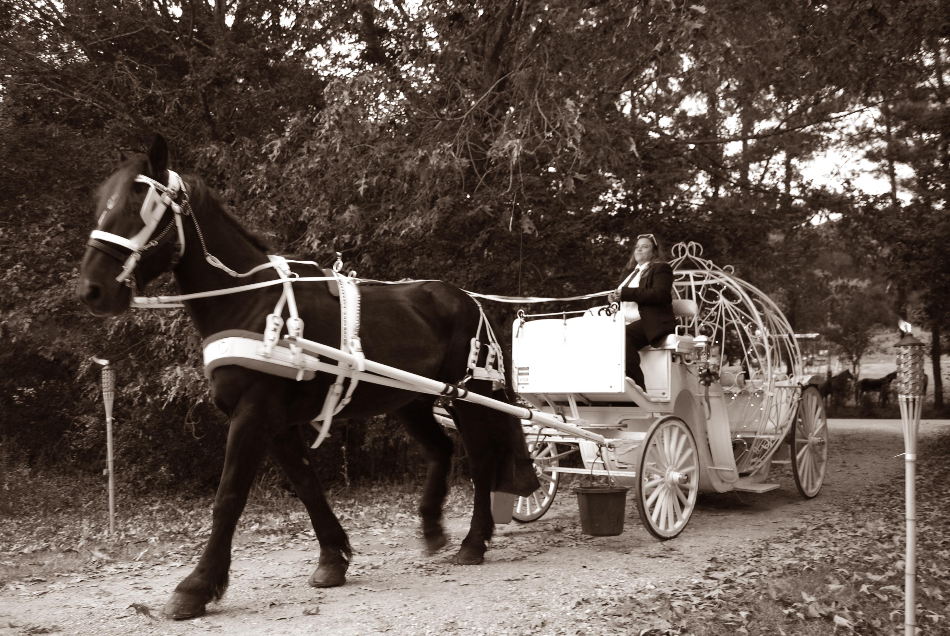 horses 078 copy copy
