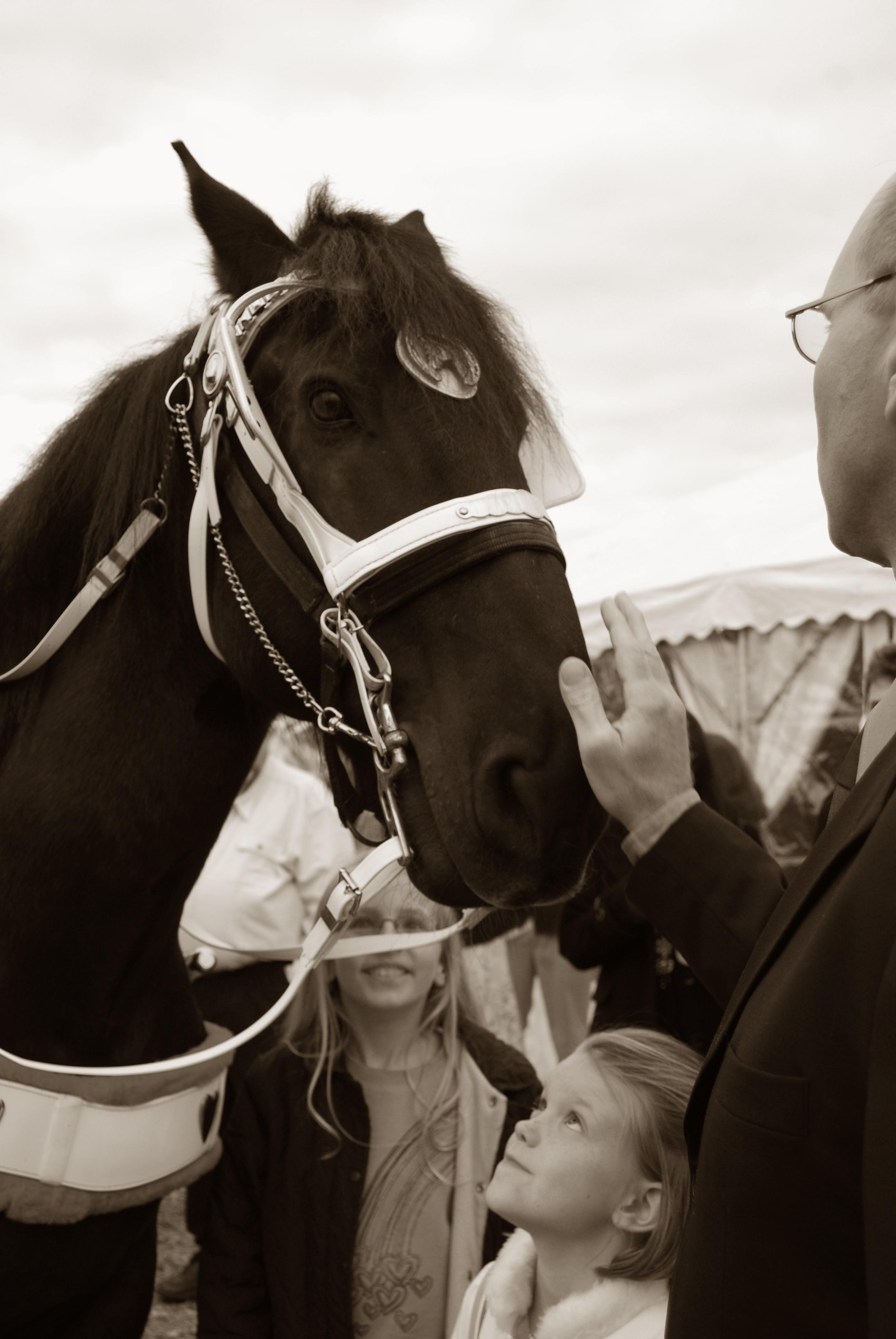 horses 091 copy