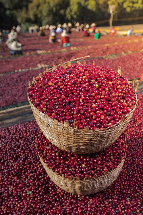 GUJI COFFEE TYPE : Arabica Grade 1- Washed & Unwashed