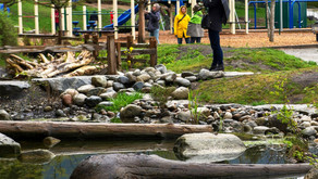 Implementing Green Stormwater Infrastructure on Schoolyards