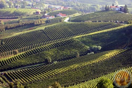 Le Langhe/Barolo hills
