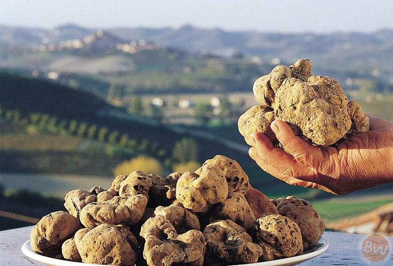 Il Tartufo/The truffle