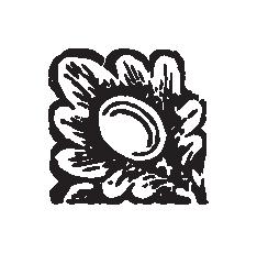 ornamentos web-03.png