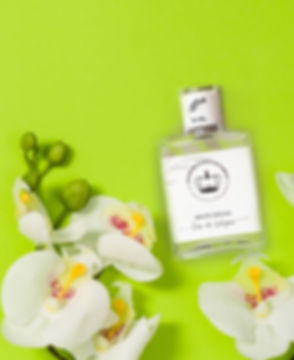 WHITE ORCHID COLONIA.jpg