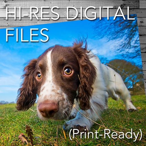 Full Resolution Digital Portrait
