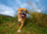 Pugzi - Mixed Breed Bounders Dog Photogr