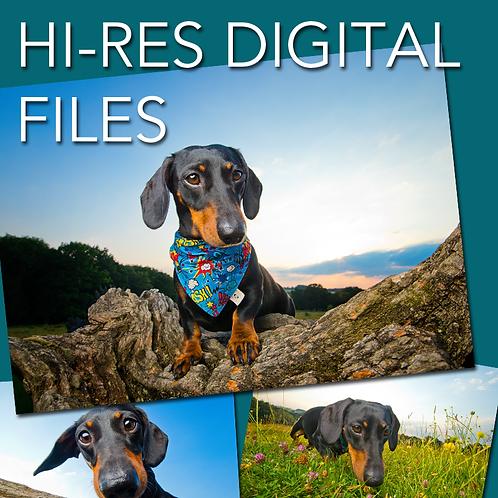Hi-Resolution Digital Files - Winter Special