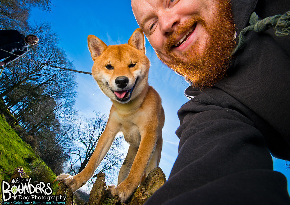 Sesame the Shiba Inu getting a quick selfie with Joe - Bounders Dog Photography