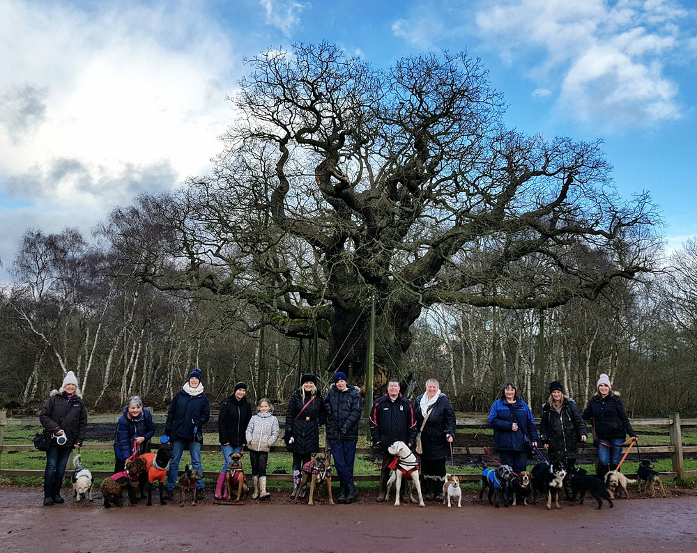 Bounders Dog Photography - Scrooby's Outward Bounders Walk in Sherwood Forest Feb 2018 - The group in front of the Major Oak