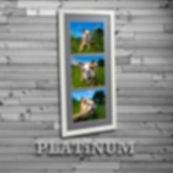 PLATINUMbadge2.png