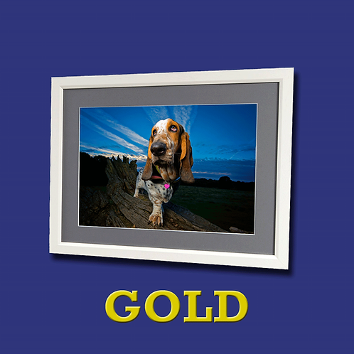 GOLD Photo Experience