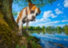 Roxy2-Boxer-Bounders-Dog-Photography.jpg