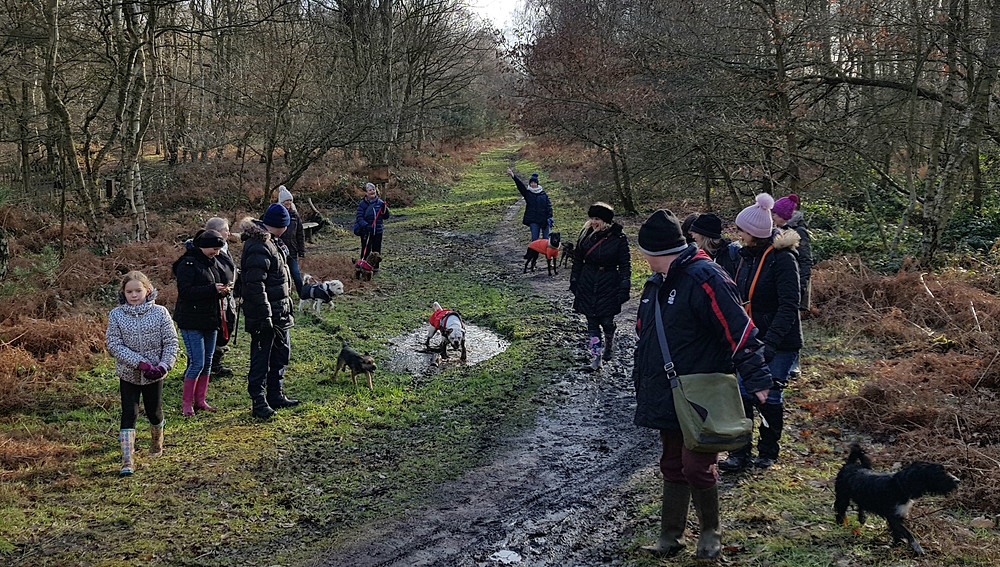 Bounders Dog Photography - Scrooby's Outward Bounders Walk in Sherwood Forest Feb 2018