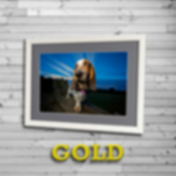 GOLDbadge2.png