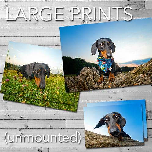 Large Prints (various sizes)