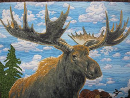 Close Up Moose
