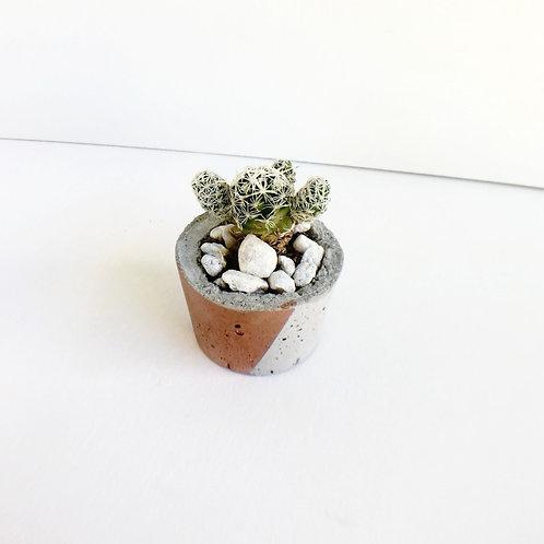 Small Concrete Planter + Cactus - Half Stripe