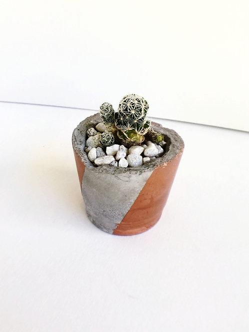 Small Concrete Planter + Cactus -Double Stripe
