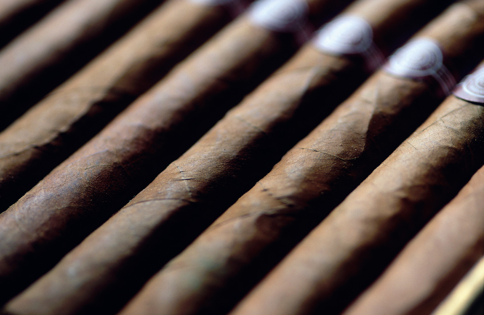 Row of Cigars