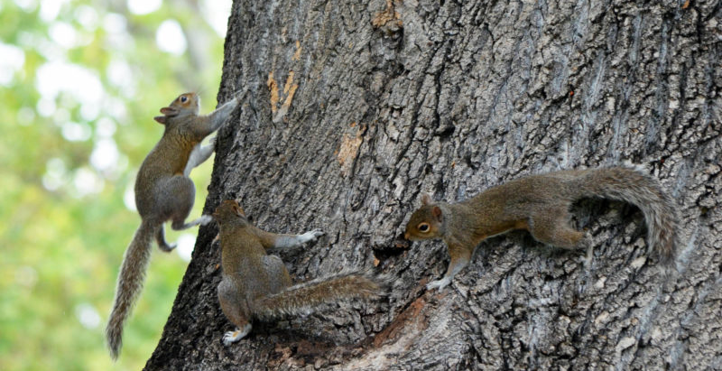 WHAT 3 SQUIRRELS TAUGHT ME!