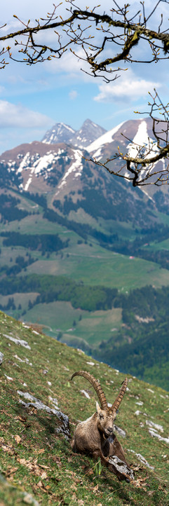 28042018-_SNY6385-Panorama-photoshop.jpg