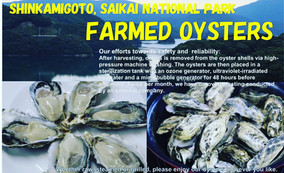 Enjoy Yourself at Home with Gorgeous Oysters Farmed in Goto Islands