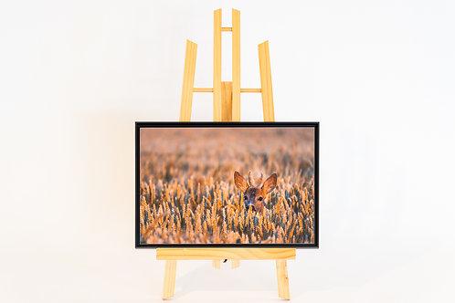 Portrait de chevreuil Dibond 20 x 30 cm et caisse américaine