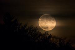 La lune et le buisson.jpg