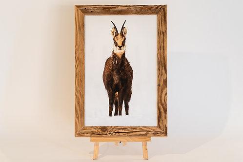 Chamois sur toile 30 x 45 cm