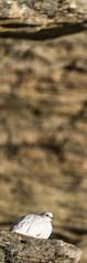 22102018-_SNY6844.jpg