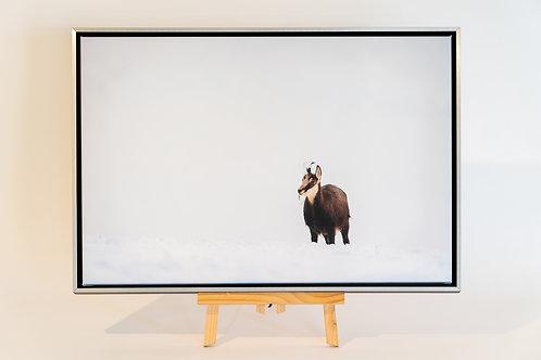 Jeune chamois dans la neige toile 40 x 60 cm avec caisse américaine Nielsen