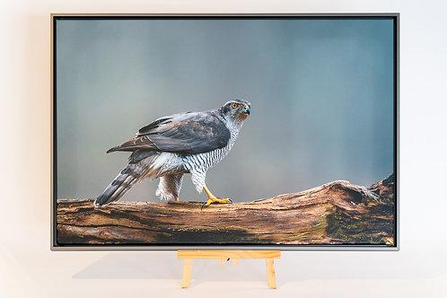 Autour de palombes toile 52 x 78 cm avec caisse américaine Nielsen