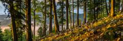 10052018-_SNY8400-Panorama.jpg