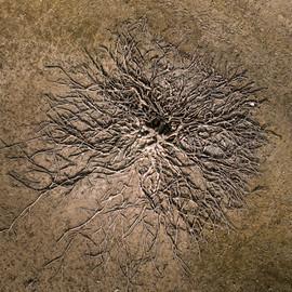 02042018-arbre.jpg