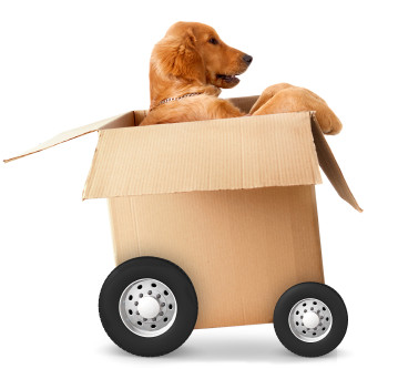 Four-legged Moving Tips