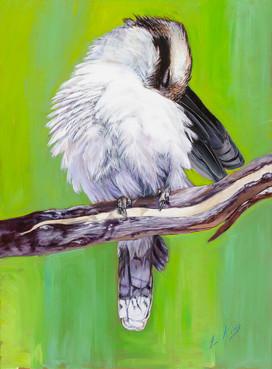Kookaburra Preening