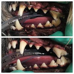 dental3.JPG