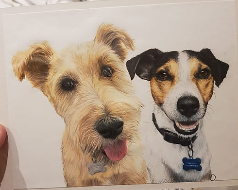 Jack russel and terrier.jpg