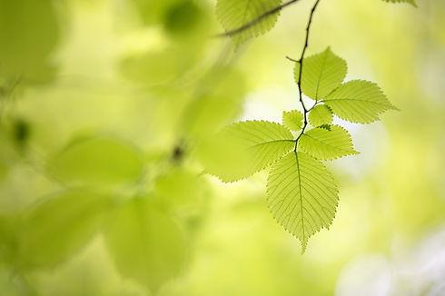 photo of green leaves.jpg